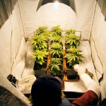 Способы использования марихуаны
