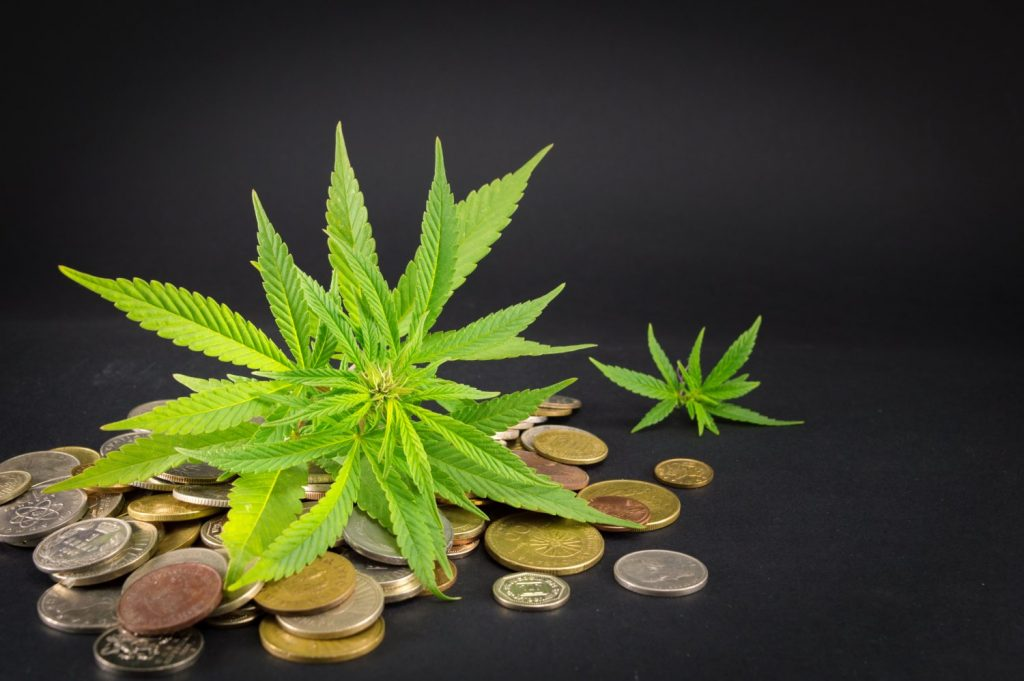 cannabis-s